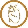 Điều hòa huyết áp và cải thiện sức khỏe tim mạch