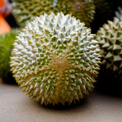Sầu riêng Musang King Malaysia tươi nguyên trái