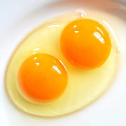 Trứng gà ăn sống hữu cơ Hakari