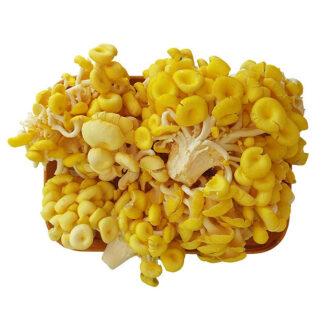 Nấm ngô tươi hữu cơ 500g