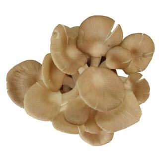 Nấm Bào Ngư tươi hữu cơ 500g
